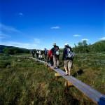 Bohlen führen über Moorlandschaften
